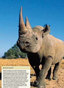 Black Gold Rhino